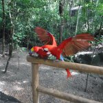 parrots that can be placed on shoulders for pics - tips for trainers