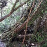 Photo of Chiloe National Park