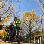 秋にはイチョウ並木の黄金ロードが見られるかもしれません