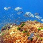 Photo of Poseidon Bungalows & Similan Tours