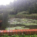 Foto de Jardines Botánicos de Singapur