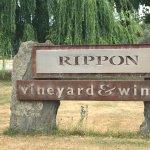 صورة فوتوغرافية لـ Rippon Vineyard