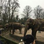 Photo de Hamburg Zoo