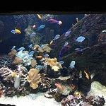 Lido di Jesolo Sea Life Aquarium Foto