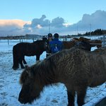 Photo of Islenski Hesturinn, The Icelandic Horse - Riding Tours