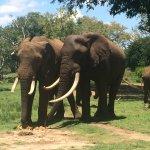 Gorgeous elephants