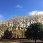 Foto de Greenwood Ridge Vineyards