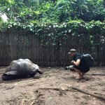 The amazing giant tortoises of Prison Island
