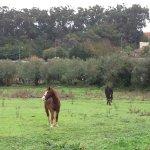 Photo de Quinta do Scoto