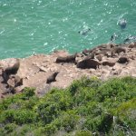 Photo de Robberg Nature Reserve