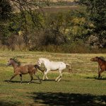 Our horses on a free gallop