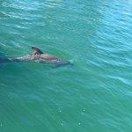 Photo of Dolphinarium Cayo Santa Maria