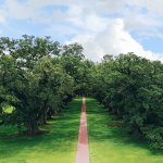 Areal view of Oak Alley Plantation
