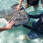 Travis helping guests pet a stingray
