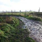 Болото и грязь у наследия ЮНЕСКО