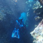 Photo of Pro Dive Cairns Day Trips