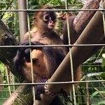 Maggie, the baby Spider Monkey