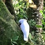 meeting a white cockatoo