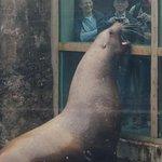 seal getting fed