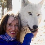One of the adolescent Arctic Wolves and me.