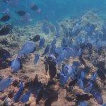 Coral Reef Club Foto
