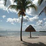 Foto de Omni Beach
