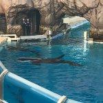 Photo de SeaWorld San Diego