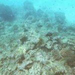 Foto de Aquarius - Sail & Snorkel