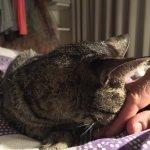 Estela the cat final goodbye