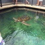 Foto de Reefworld Aquarium and Shark Swim