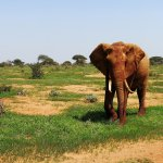 2 days Safari at Tsavo East