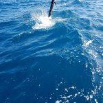 Foto van Sea Horse Private Charters