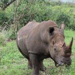 Bilde fra Ubizane Wildlife Reserve