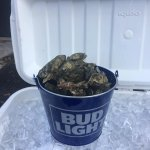 $10 Oyster Buckets in Season