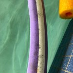 What appears to be black mold on the pool noodles