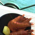 The shrimps #mundosully