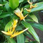 Цветки, похожие на клешню лобстера