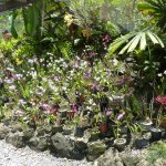 Orchid Bed