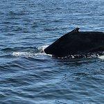 Dolphin Fleet Whale Watch resmi