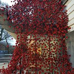 poppy exhibit