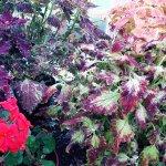 Photo de Botanic Gardens