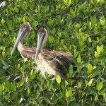 Photo of Flamingo Tours