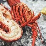 The Lobster Shack Tasmania resmi