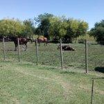 Photo de El Galope Horse Farm & Hostel