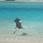 Photo of Holiday Inn Resort Kandooma Maldives