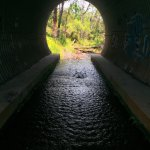 Tunnel upstream of the second water hole