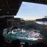 Foto Enoshima Aquarium