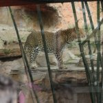 Photo de Bioparc Fuengirola