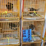Photo of Bird Garden Yuanpu Street