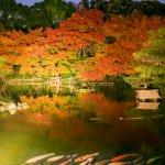 Japanese Garden(Autumn)
